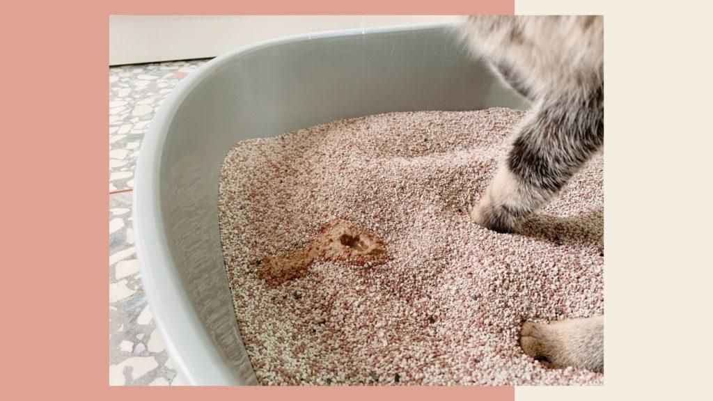 里德貓砂貓咪使用